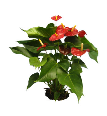 House Plant Names And Pictures Popular House Plans And